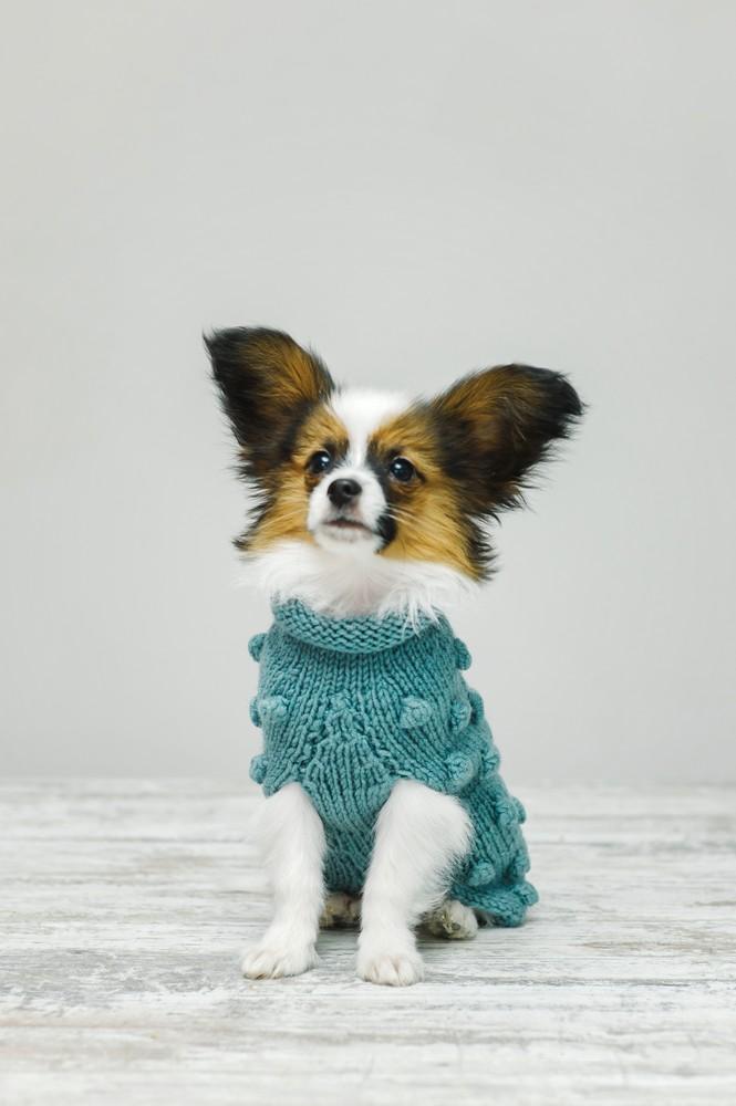 вязаная одежда для собак купить в интернет магазине вязаный свитер