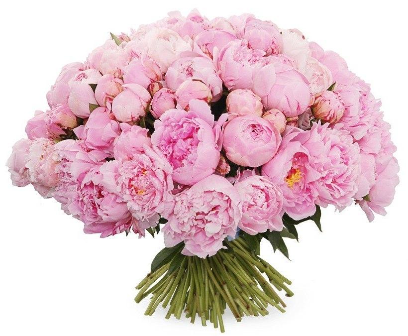 Цветы, купить букет пионов розовые в москве недорого
