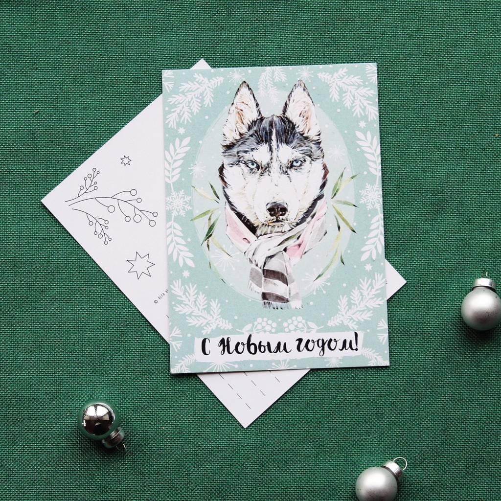 Картинки, хаски открытка